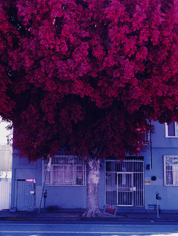 a tree in los angeles